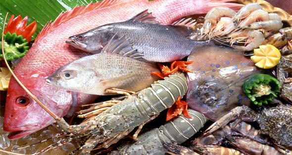 giữ cá tươi sống